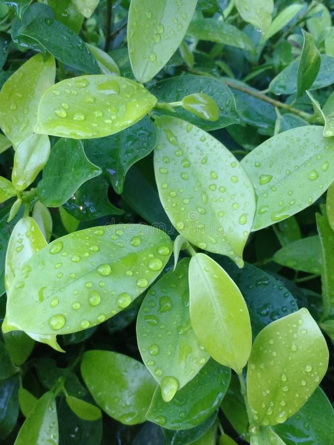 绿色浪漫史在雨中 库存照片