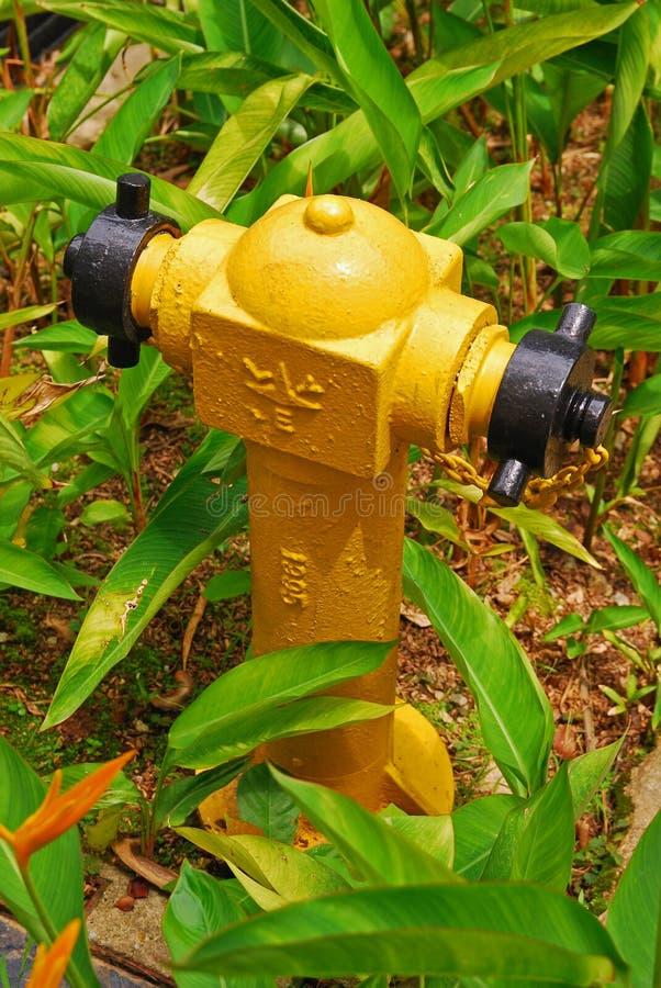 黄色消防龙头在庭院里 库存图片