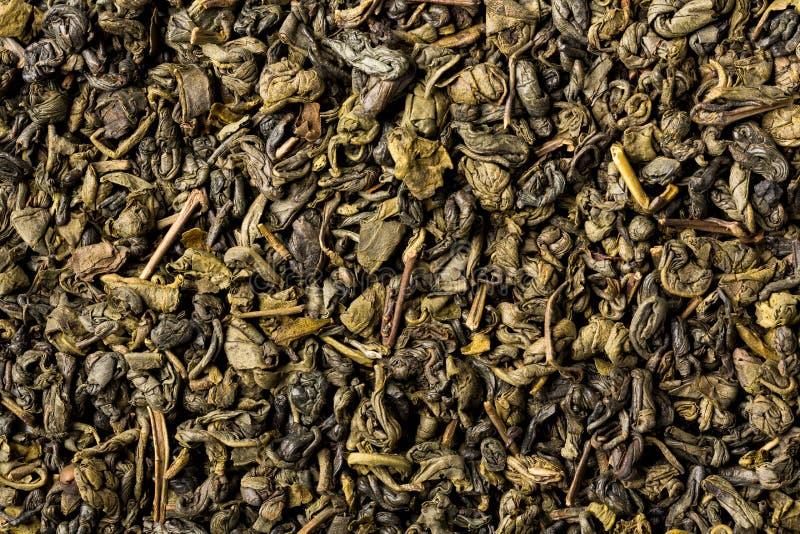 绿色火药茶,充分的框架干叶子  库存图片