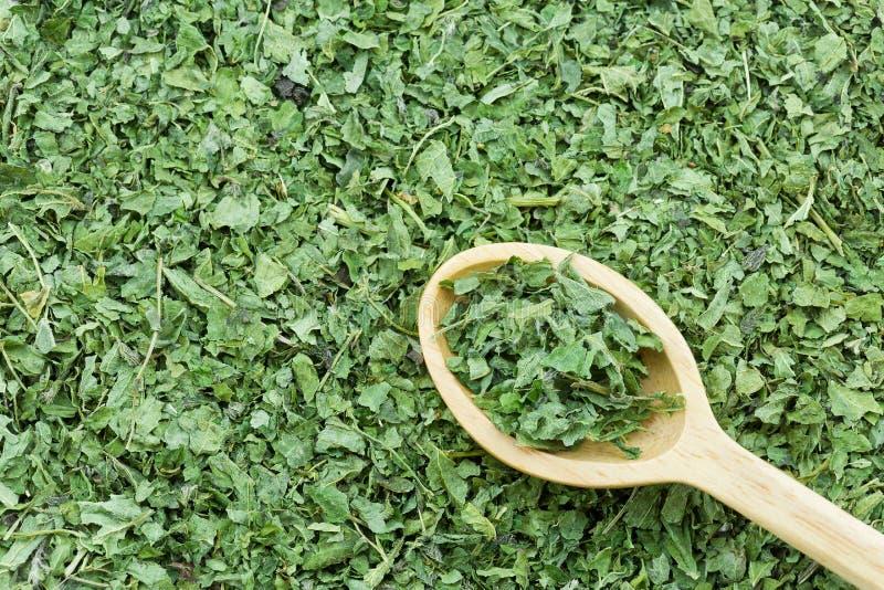 绿色烘干在木匙子的共同的荨麻叶子使热她 免版税库存图片
