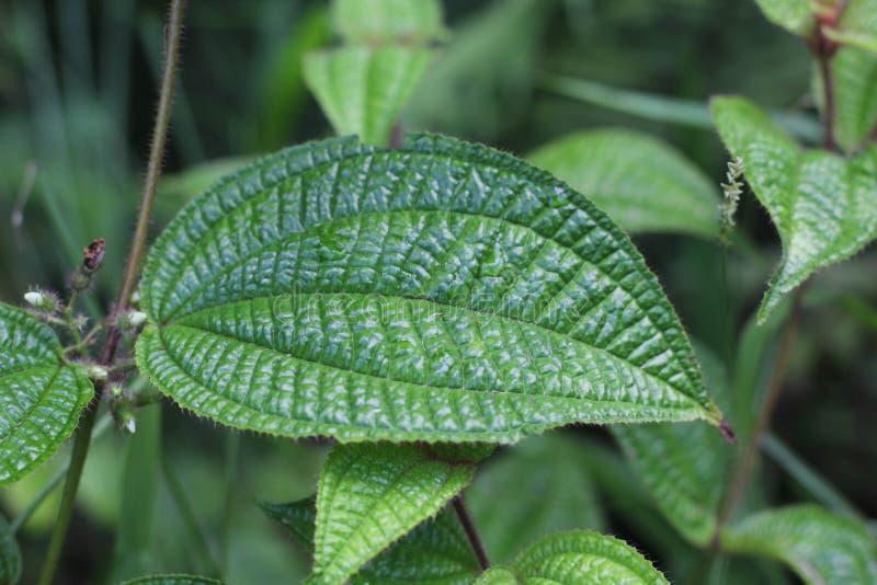 绿色热带叶子 库存图片