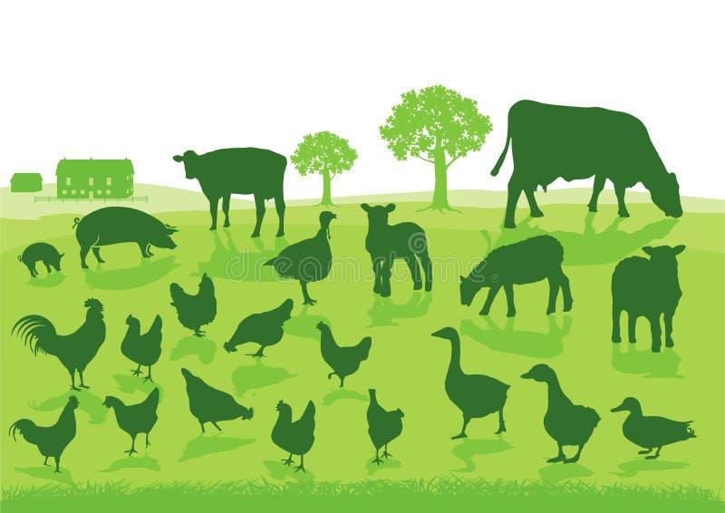 绿色牲口 向量例证