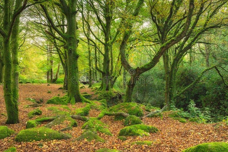 绿色生苔森林 库存图片