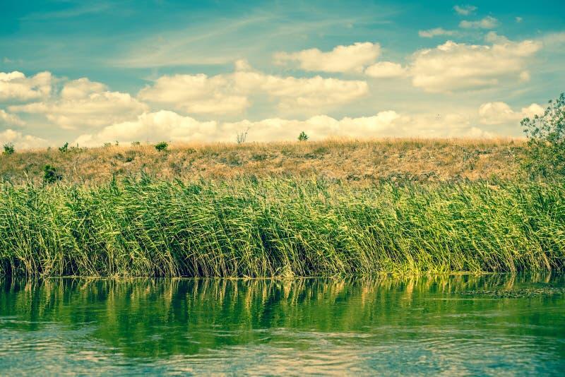 绿色由河沿冲 免版税库存照片
