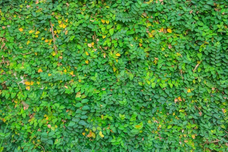 绿色留下墙壁 免版税库存图片