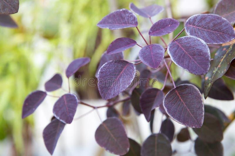 紫色留给对比绿色背景 免版税库存图片