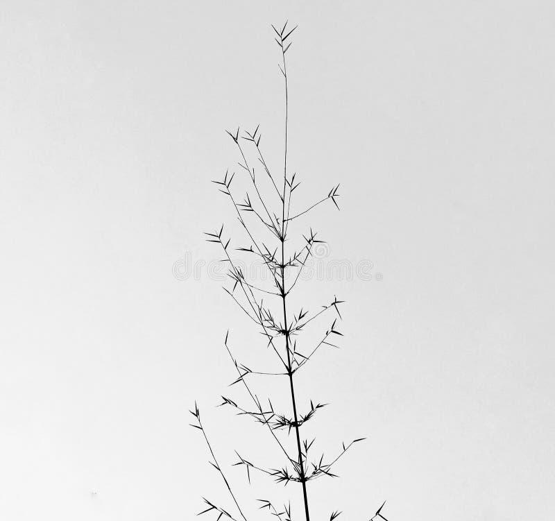 黑色白色 图库摄影