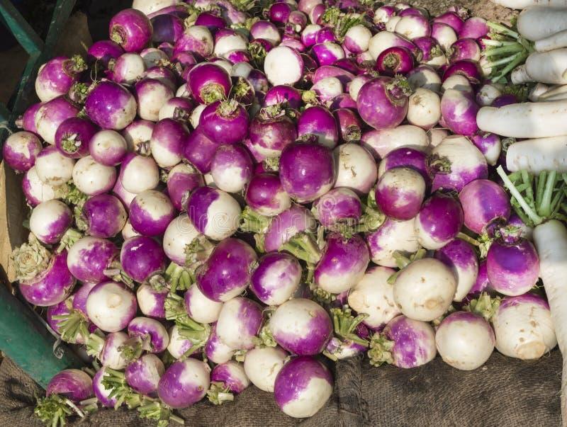 紫色白萝卜 图库摄影