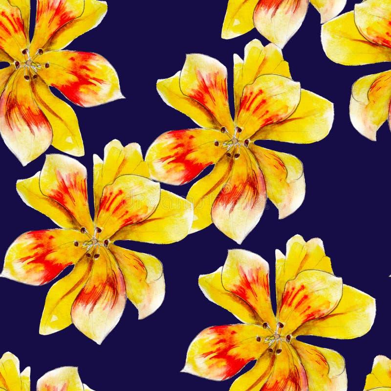 黄色百合花水彩无缝的样式 在蓝色背景隔绝的明亮的热带花 皇族释放例证