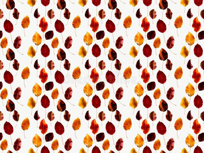 色的下落的秋叶的汇集 免版税库存图片