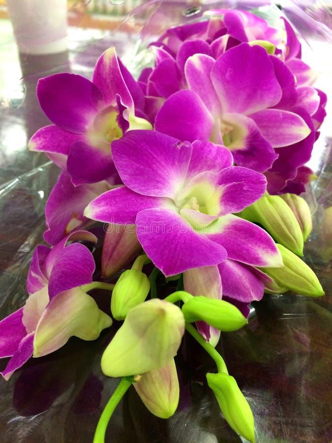 紫色的兰花 免版税图库摄影