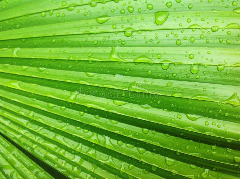 活绿色的叶子 库存图片