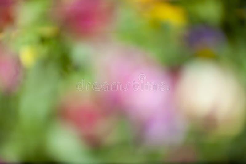 色的夏天背景 库存照片