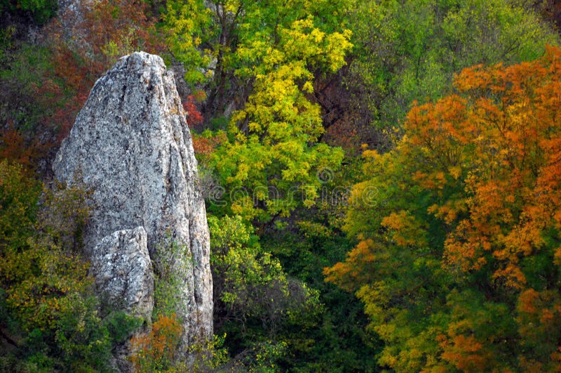 色的寿命仍然向结构树扔石头 免版税库存照片