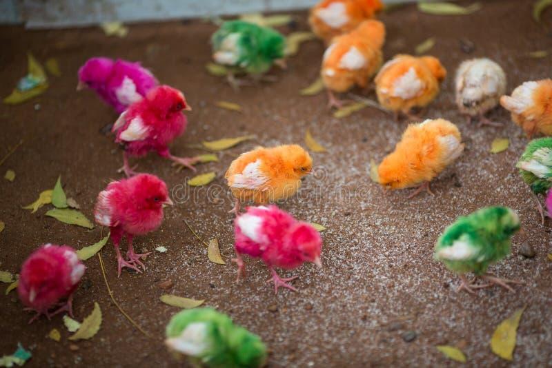 Download 色的小鸡 库存照片. 图片 包括有 系列, 国内, 小鸡, 茴香, 照亮, 婴孩, 乐趣, 新出生, 羽毛 - 30333058