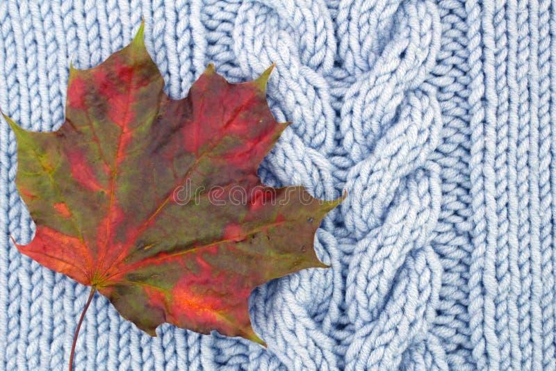 色的槭树叶子,红色和绿色在蓝色编织了羊毛螺纹背景 免版税图库摄影