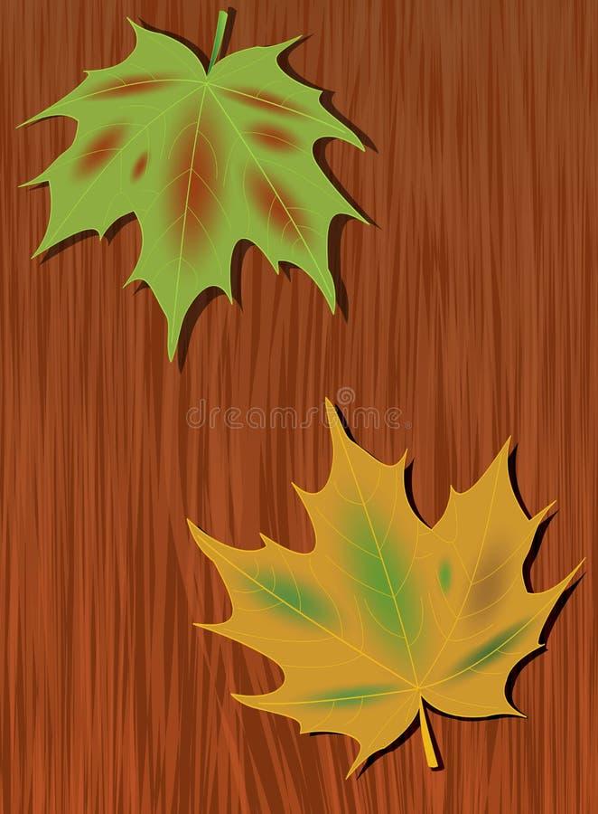 色的槭树在黑暗的木头背景离开  - 与自然主题的秋天背景 绿色和黄色枫叶 向量例证