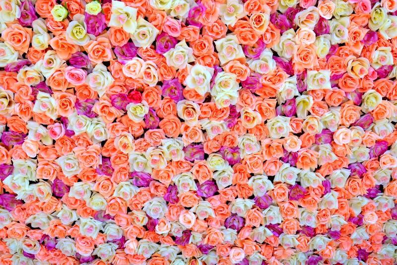 色的玫瑰背景  库存图片