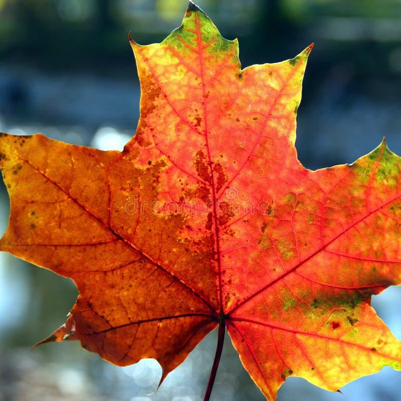 色的秋天事假 库存照片
