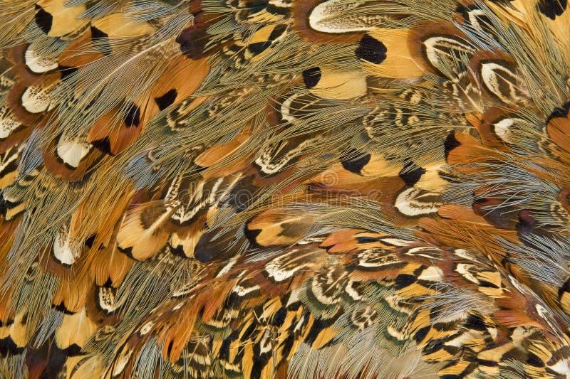 色的羽毛 库存图片