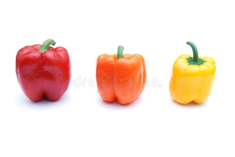色的胡椒 免版税库存照片
