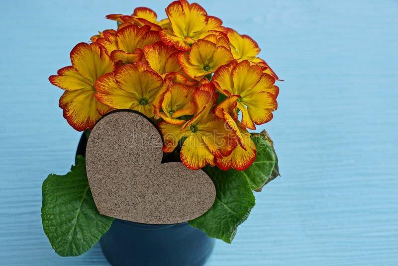 色的花花束在花盆和灰色心脏 库存照片