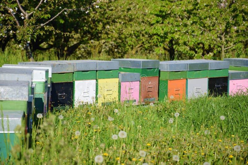 色的蜂箱在草甸 免版税库存图片