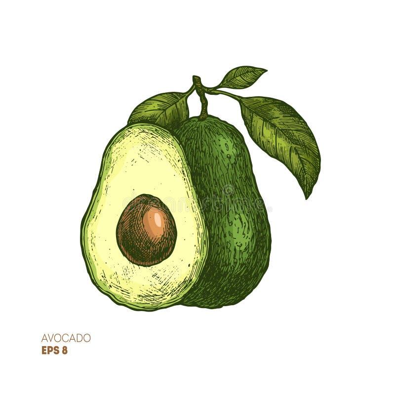 色的鲕梨植物的例证 被刻记的样式例证 成套设计 也corel凹道例证向量 库存例证