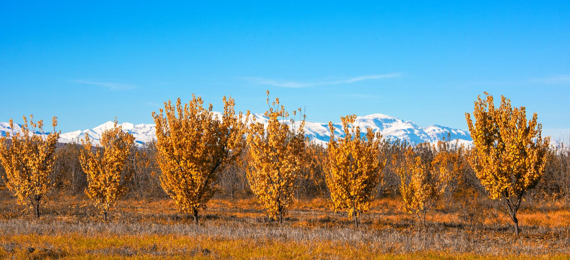 黄色秋天结构树 免版税库存图片