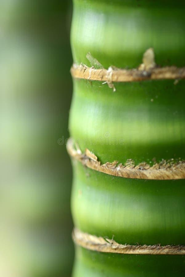 绿色竹吠声纹理 库存照片