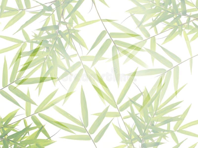 绿色竹子叶子在自然森林背景中 库存图片