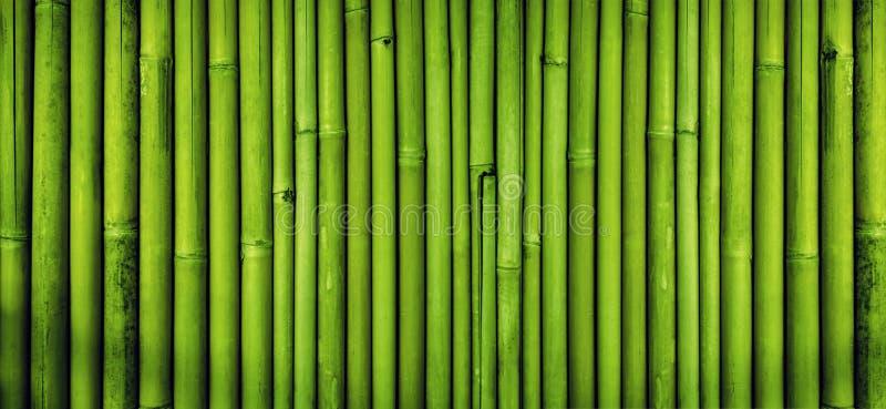 绿色竹篱芭纹理背景,竹纹理全景 免版税库存照片