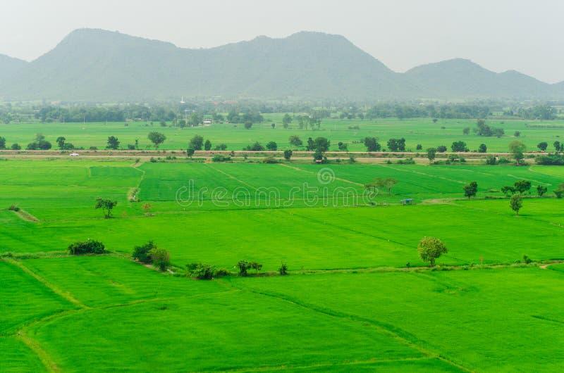 绿色米在泰国的北高地调遣 免版税库存照片