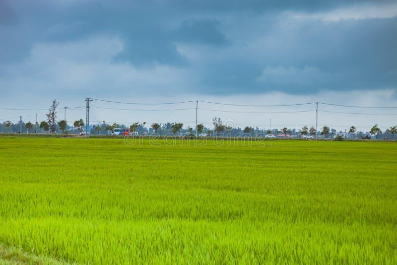 绿色米领域和carst mounains hoi越南 免版税库存照片