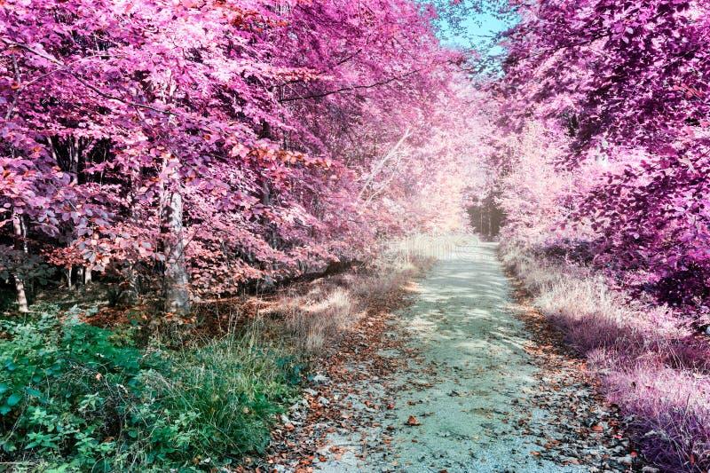 紫色红外森林风景 免版税库存照片