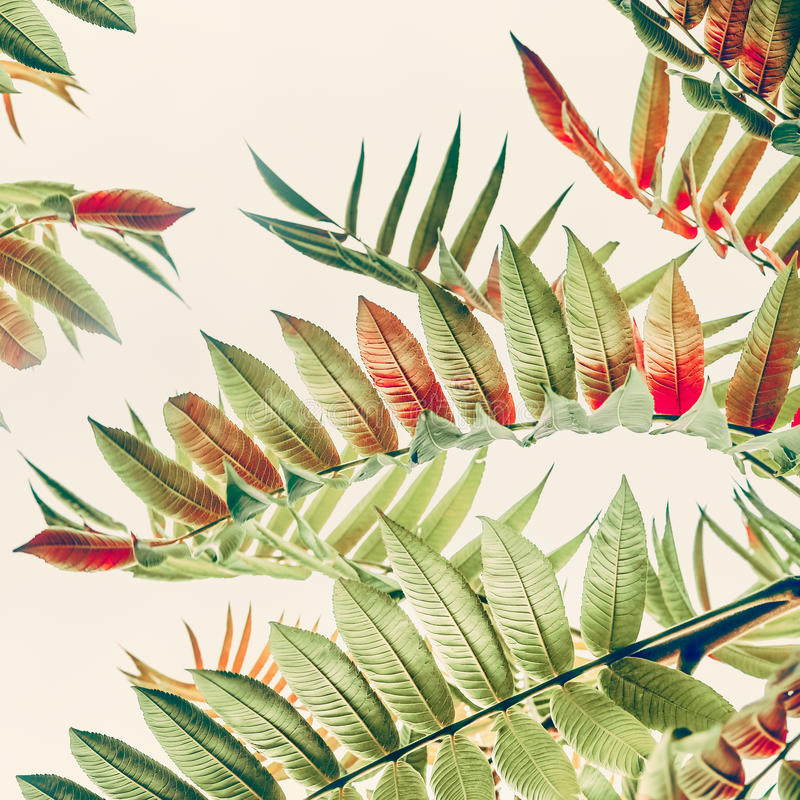 绿色红色热带或密林在轻的淡色背景,关闭离开  皇族释放例证