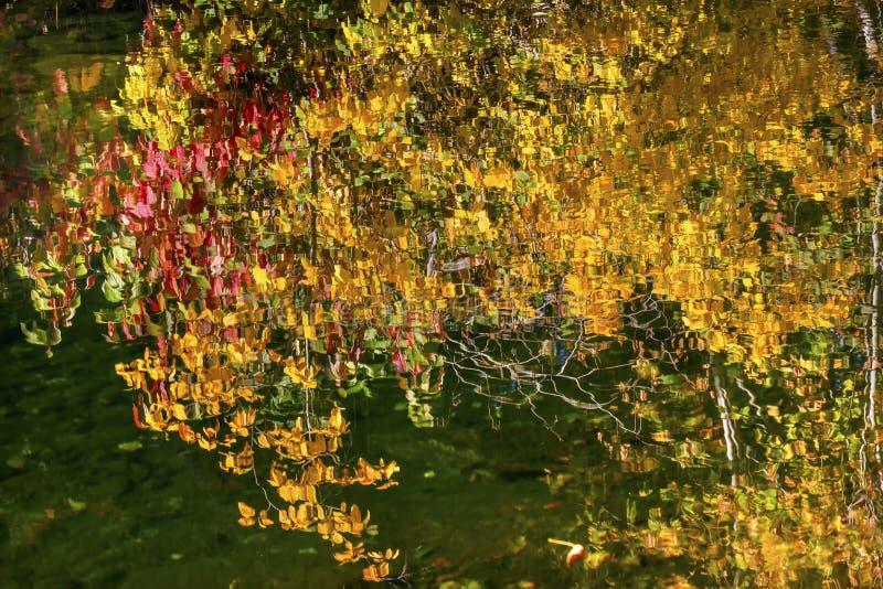 黄色红色秋天上色水反射Wenatchee河华盛顿 免版税库存照片