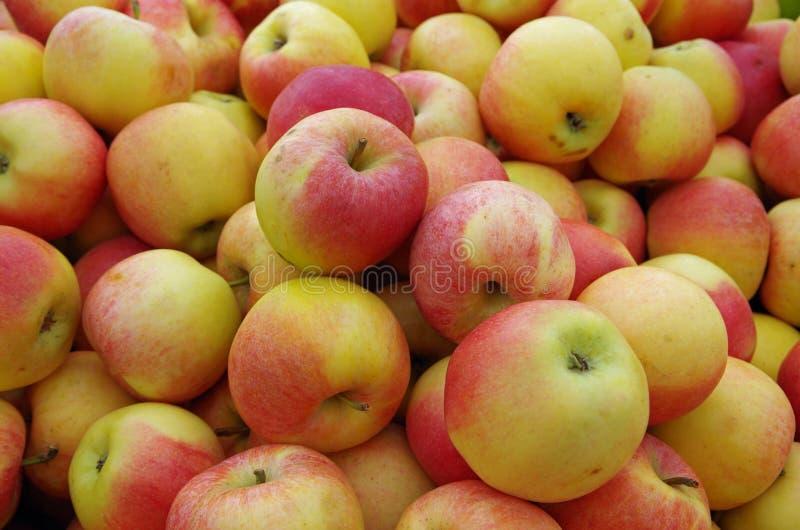 黄色红色苹果 免版税库存照片