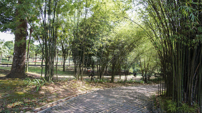 绿色美丽的庭院和花 库存照片