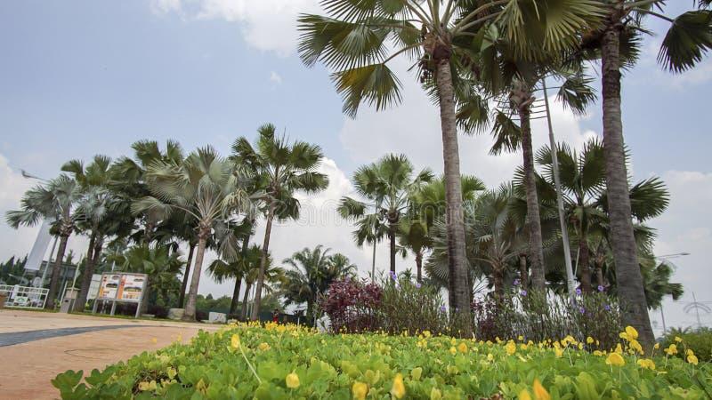 绿色美丽的庭院和花 免版税库存照片