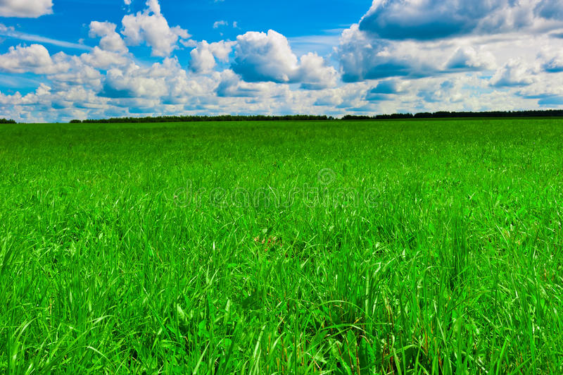 绿色美丽的草坪和好的晴朗的天气 免版税库存照片