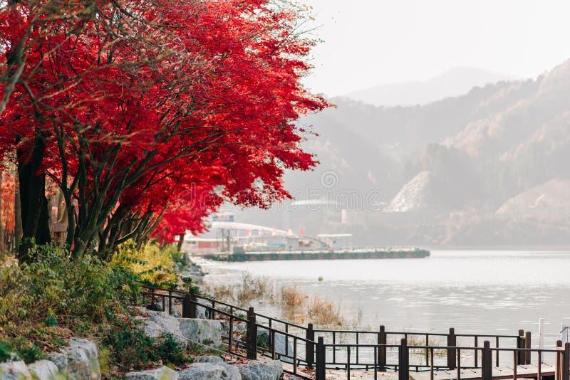 黄色背景纹理留下秋天叶子背景 图库摄影