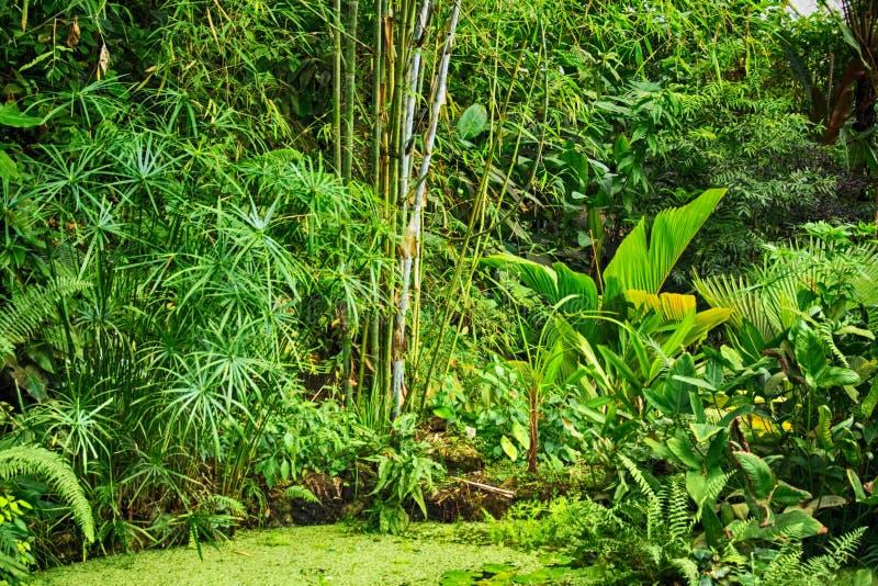 绿色自然密林 库存照片