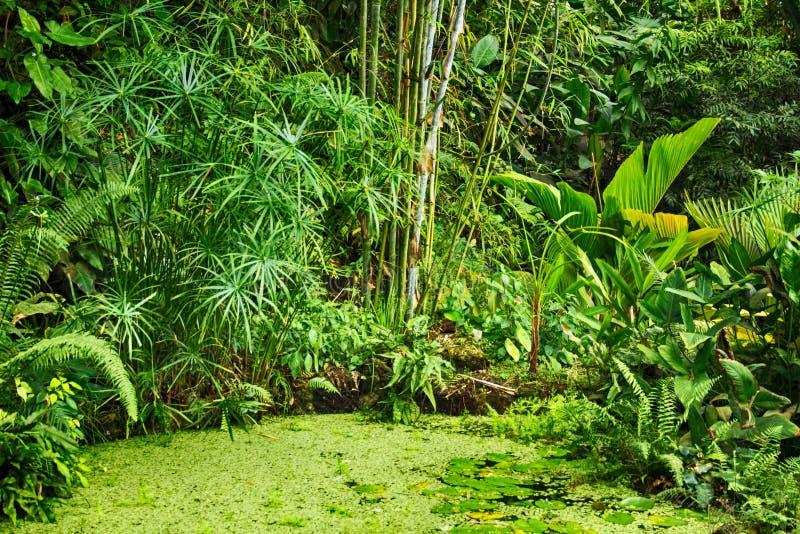 绿色自然密林 免版税库存照片