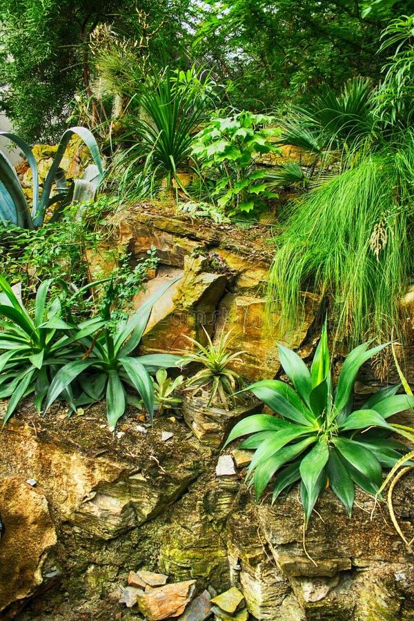 绿色自然密林 免版税库存图片