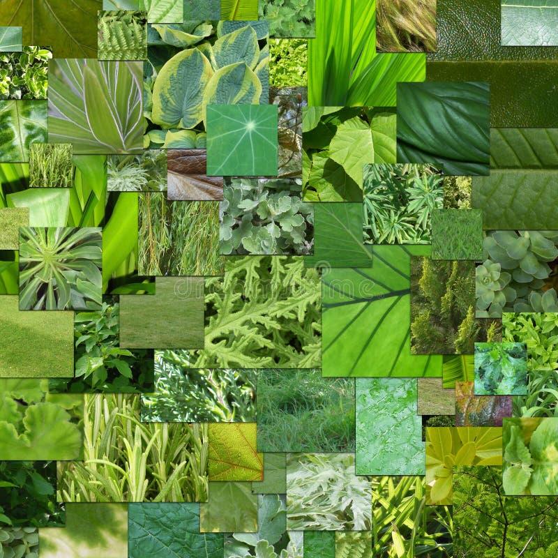 绿色自然 免版税图库摄影