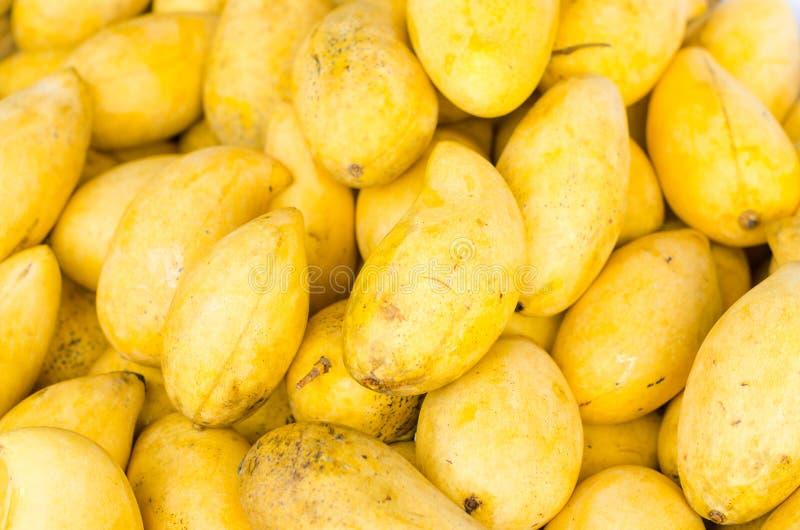 黄色芒果 免版税库存照片