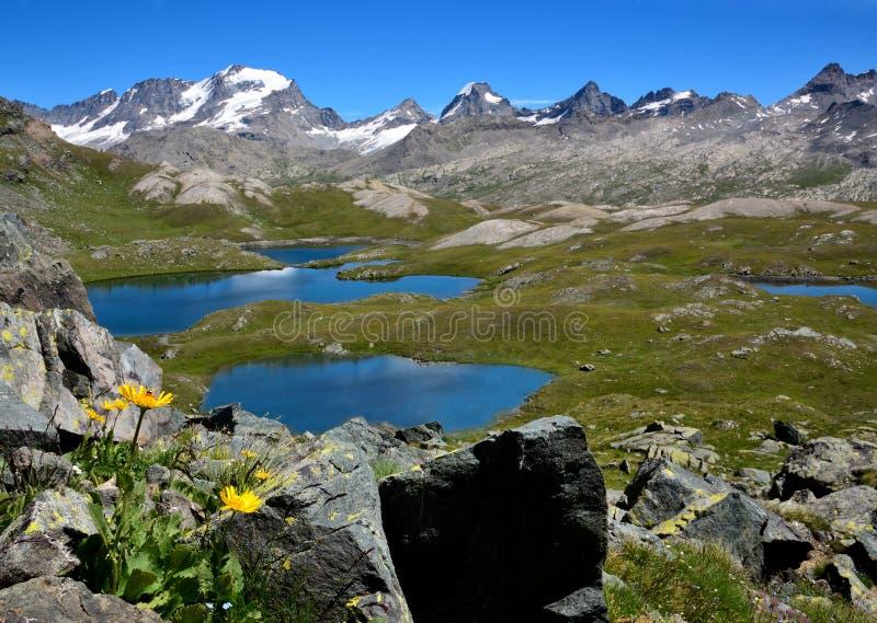 黄色花、湖和山在Nivolet计划- Gran Paradiso国家公园-意大利 免版税库存图片