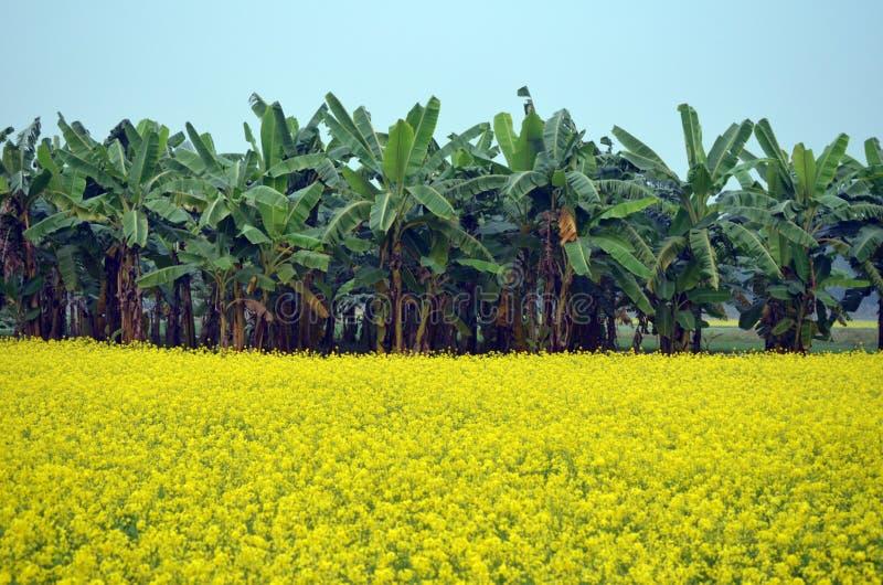 绿色花和香蕉树 免版税库存照片