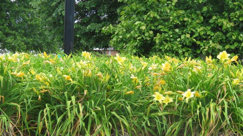 黄色花园 免版税库存照片